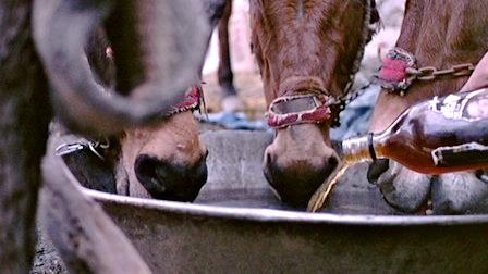 Drunken Horses
