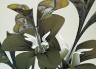 'En crecimiento y forma', Daniel Brown