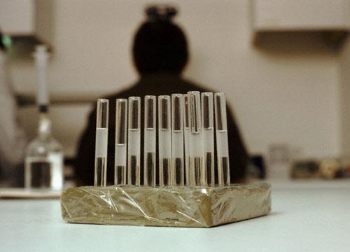 Tubos de ensayo con espermatozoides preparados para inseminación artificial. CORBIS