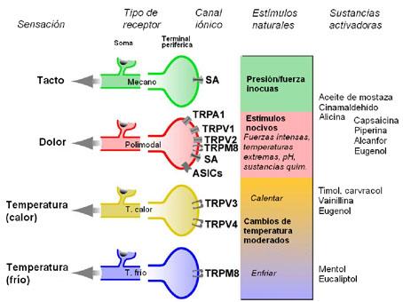 Representación esquemática de los distintos canales iónicos