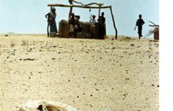 Caballo muerto en el desierto