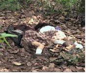 Dos cuerpos yacen en el suelo