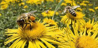 bees_540.jpg