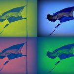 Composición banderas.jpg
