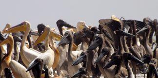 Senegal_540.jpg