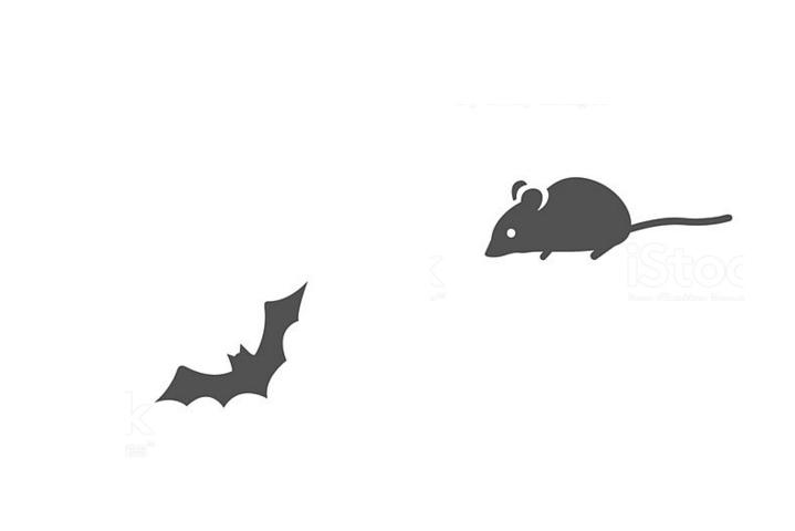Marcelo y rata